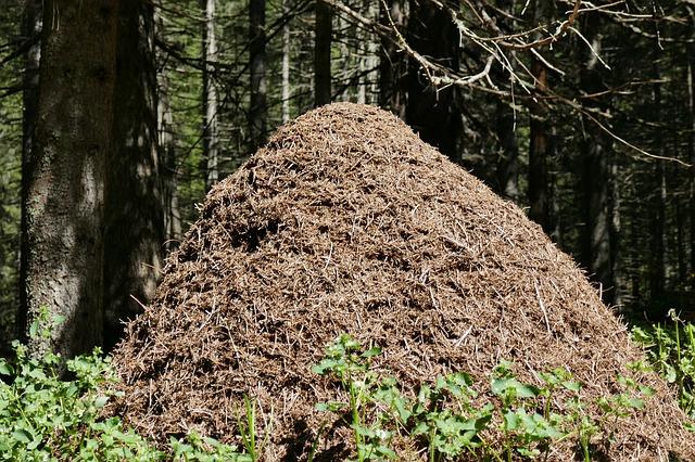 Viete čo sa deje v mravenisku?