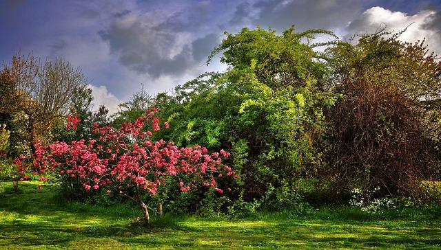 Aké je tajomstvo úspešného pestovania stromov? Neporiadok!